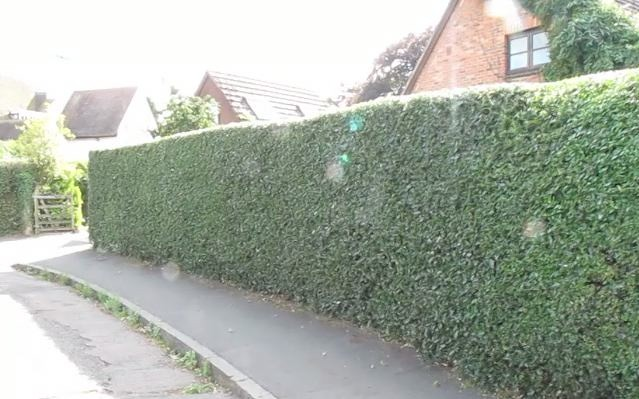 The Hedge at Beam Ends