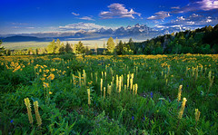 Mountain Of Wildflowers (wrtrekker (Jerry T Patterson)) Tags: bear travel flowers camping camp mountain ski mountains barn canon outdoors skiing hiking wildlife barns hike jackson antelope patterson wildflowers wyoming elk rv teton tetons bison ynp wy moulton pronghorn tnp coth 60d colorphotoaward mygearandme ringexcellence