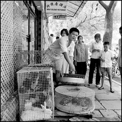 No ordinary pet store (Fusty Box) Tags: china restaurant guilin ilford fp4 guanxi livefood