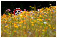 more-than-50 (Don Pedro de Carrion de los Condes !) Tags: wildflowers bloemen donpedro abbaye overtreding