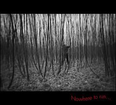 Nowhere to run - 8086k (NH_Snap) Tags: trees bw white man black lost escape run hide blackwhitephotos nhsnap