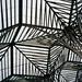 Calatrava's Jungle