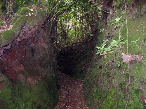Meža ceļš