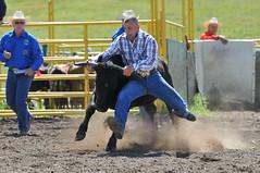 006-CD-2011 CPRA (calgarypolicerodeophotos) Tags: calgary police rodeo chute dogging cpra
