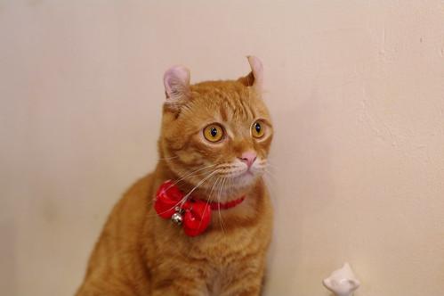烤小捲~~橘光呼嚕貓餐廳