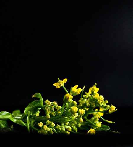 IMG_0981 菜心花,Chinese Mustard Green Flowers