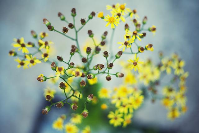 Bokehlicious flowers