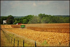 Early Harvest (TumblingRun) Tags: fall texture rural corn nikon farm country harvest iowa combine johndeere d90 kimklassen explore762sep2011