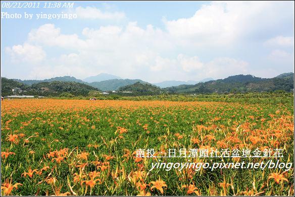 南投魚池_頭社活盆地金針花20110821_I1328