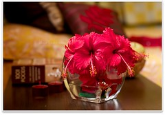 and they bloom to fill ... (~GlassLightHues~) Tags: flowers people woman india home smile happy afternoon photographer dof little lakshmi gifts hibiscus coexistence bedside blooms simple realise theredriddley gettyimagesindiaq4