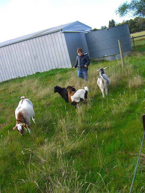 Luca the Goat Herder