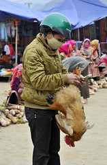 16_LAO71110040 (TC Yuen) Tags: vietnam sapa hmong terracefarming locai