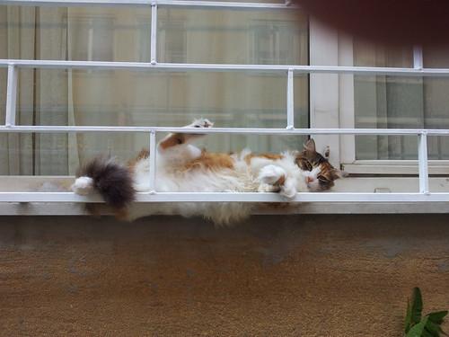 A macskák is szabin vannak...