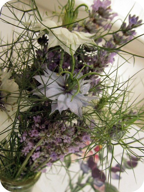 Nigella Love in a Mist - Persian Jewels