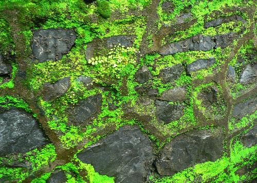 Wall foliage