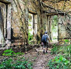 Paredes internas, engolidas pela selva