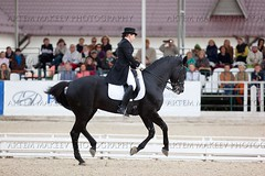 IMG_1769 (White Bear) Tags: horses horse animals sport russia equestrian artem dressage        makeev      equene