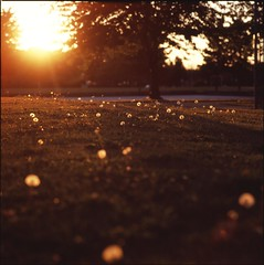 (m.tones) Tags: sunset canada 120 6x6 film analog zeiss square t golden fuji bc richmond iso hasselblad velvia hour carl medium format 100 f4 cf 500cm sonnar 150mm