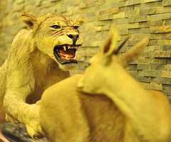 Mr.1000000 (Mr.1000000) Tags: al dubai ibm ibrahim فزاع ابراهيم حيوانات دبي حيوان غزال ظبي اسد برشلونه mr1000000 الفلامرزي mr1000000 flamrzi