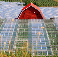 A SEA (river?) OF GLASS  #3 (vermillion$baby) Tags: barn farm fraservalley geometric glass greenhouse line pattern red light abbotsfordarea abstract arty fraser river valley bc canada agriculture fraserriver art angle abbotsford bright beautifulbc vanishingpoints vanishingpoint