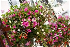 hanging baskets (heavenuphere) Tags: flowers summer france basket hanging chamonix hautesavoie rhnealpes chamonixmontblanc 55250mm