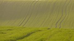 Villanañe inguruan (Araba) (Amaia eta Gotzon) Tags: verde green campo alava prado pays basque euskadi basquecountry paisvasco trigo baskenland araba villanueva paysbasque paísvasco álava valderejo zelaia berdea angosto gaubea valdegovía villanañe valdegovia gettyiberiasummer villanuevadevaldegovía