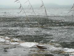 20091115_140315.jpg (tth666) Tags: suomi lahti jrvi j vesijrvi pijthme kaisla etelsuomi lahdenseutu