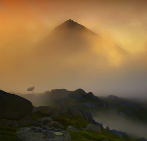 golden mist and one lost sheep by steinliland