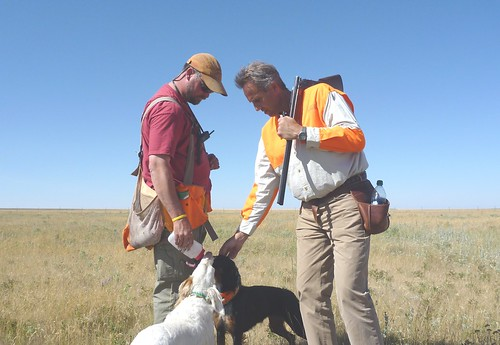 Sharptails and Setters 1