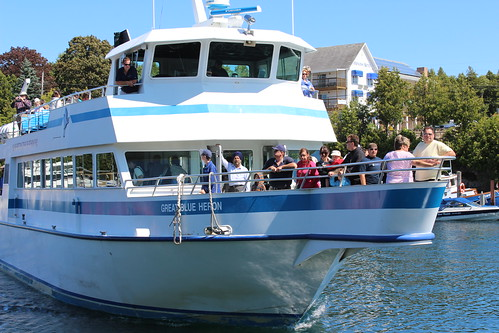 Great Blue Heron approaching dock