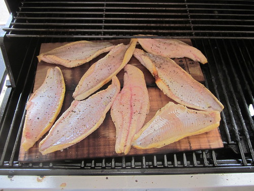Cooking fish on grill on cedar planks
