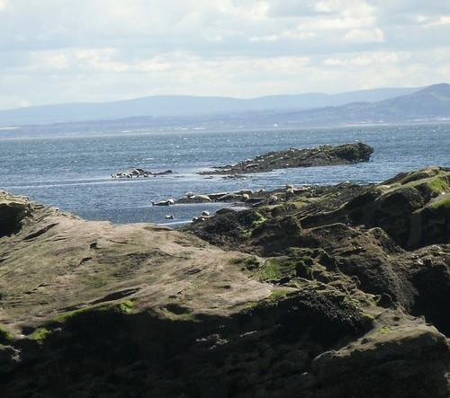 Seals 4