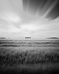 four minutes of field (cactusmelba) Tags: trees sky white black blur glass field landscape three moving movement blurry pentax welding wheat again filter swish swaying aficionados simples blurring k10d pentaxk10d