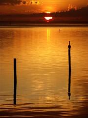 Atardecer en Champotn, Campeche (La Rebelin de los Tornillos) Tags: sunset atardecer pelican ocaso pelicano