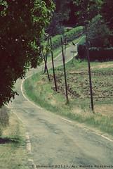 (burberi (detta Bèuf)) Tags: street nikon strada campagna collina d60 pavese oltrepò saliceterme oltrepòpavese godiasco splendidoltrepò burberi