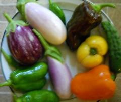 2011, Aug. 15 harvest