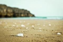 Festn de gaviotas (Itziar Aio) Tags: mar playa gaviotas plumas ajo lvm cuberris lavueltaalmundo diariodeviaje