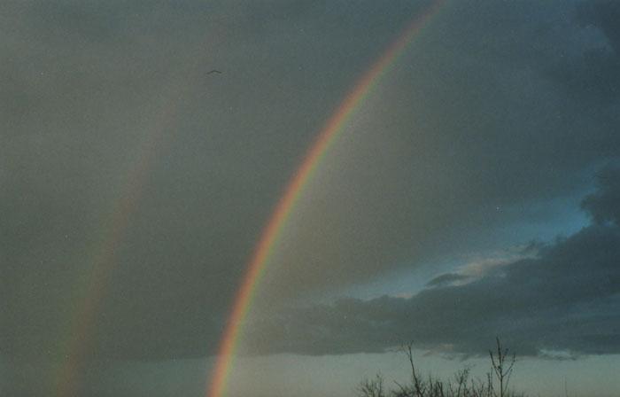 rainbow {yashica}