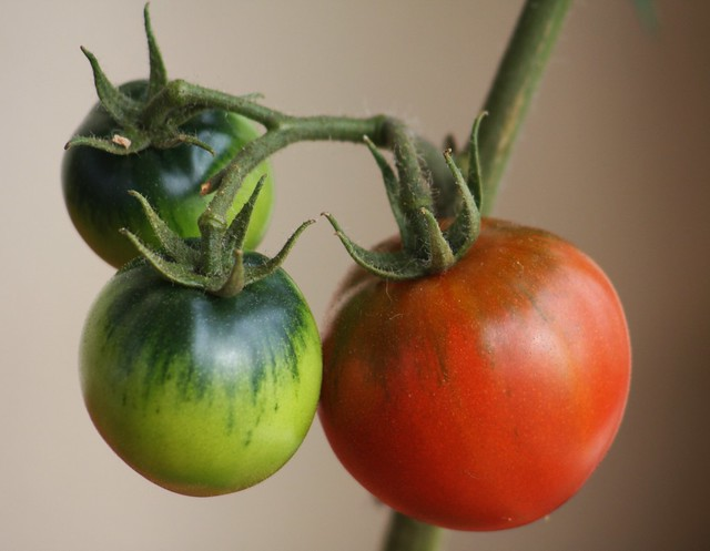 Verdes e encarnados