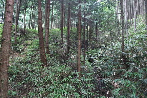 Cedar and stream