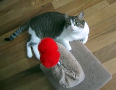 Potato (Sarkerbot) Tags: cute cat potato scratchingpost