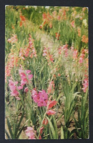 Vintage Postcards 012