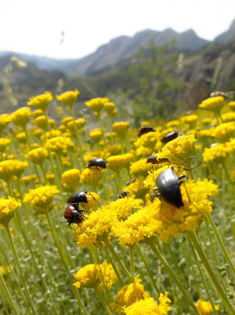 Guhyaloka flora 7