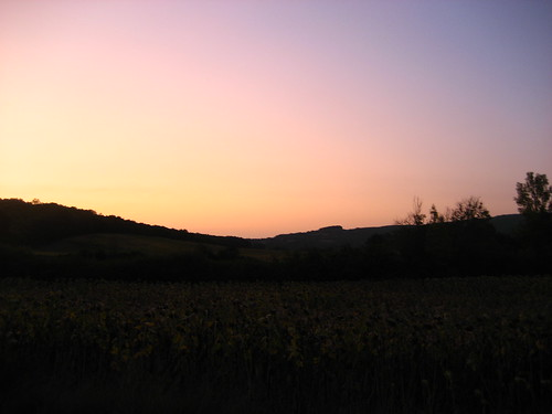 Dawn, by a sunflower field in Arnac
