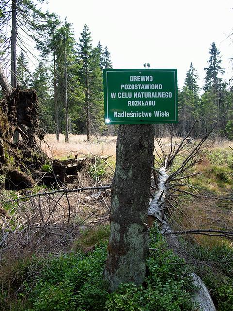 Drewno pozostawiono w celu naturalnego rozkładu