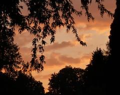Swiss Sunset 2 (Sunset~Beauty) Tags: pink trees sunset sky orange black leaves silhouette night clouds lumix switzerland cloudy luzern panasonic lucerne regionwide dmczs7