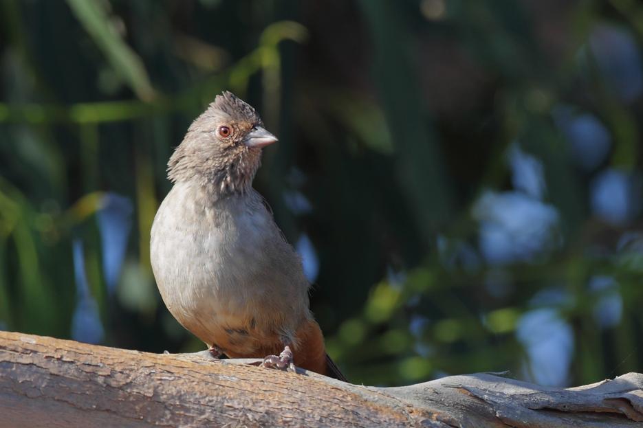082411_bird02