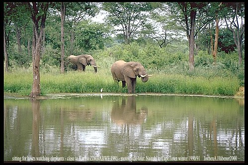 1991, SIMBABWE, 2 Elefanten am Natur-Pool_Nairobi-Kapstadt per Motorrad-19
