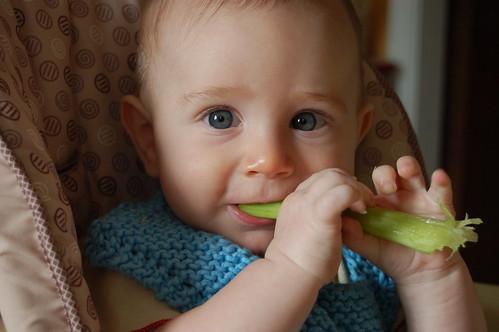 celery eater