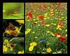 Hi Summer (Mr Grimesdale) Tags: butterflies wildflowers stevewallace britishwildflowers britishbutterflies mrgrimesdale
